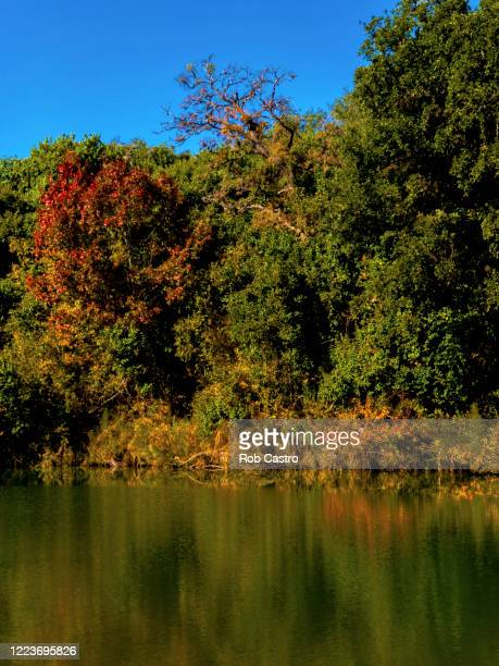 blue hole in autumn - rob castro stock pictures, royalty-free photos & images