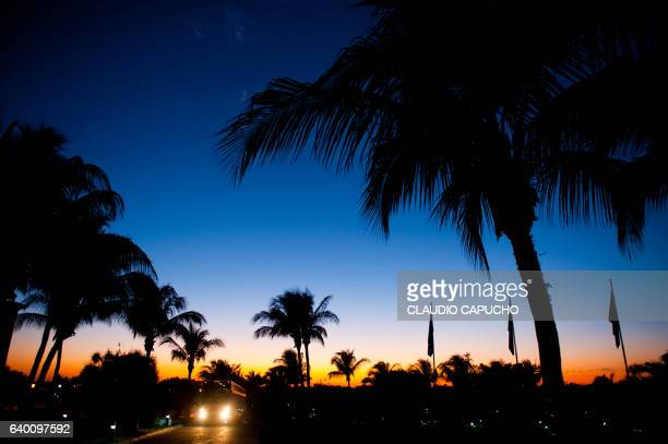 blue hour and palm trees - claudio capucho stock photos and pictures