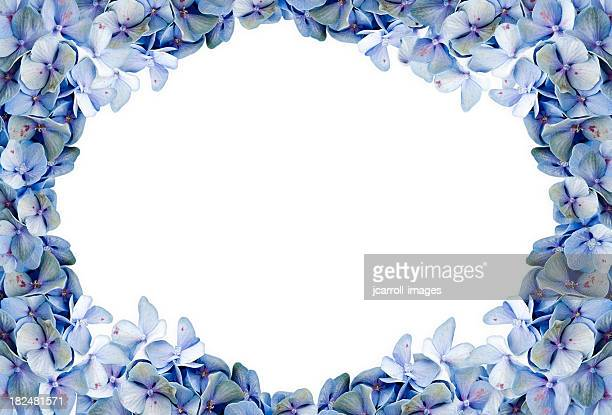 Blue Hydrangea Framed Background