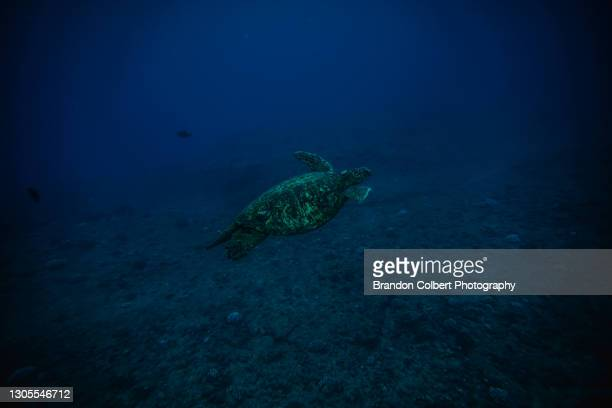 blue island water - underwater film camera stock pictures, royalty-free photos & images