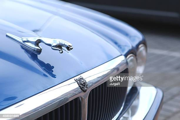 blue jaguar - hood ornament stock pictures, royalty-free photos & images