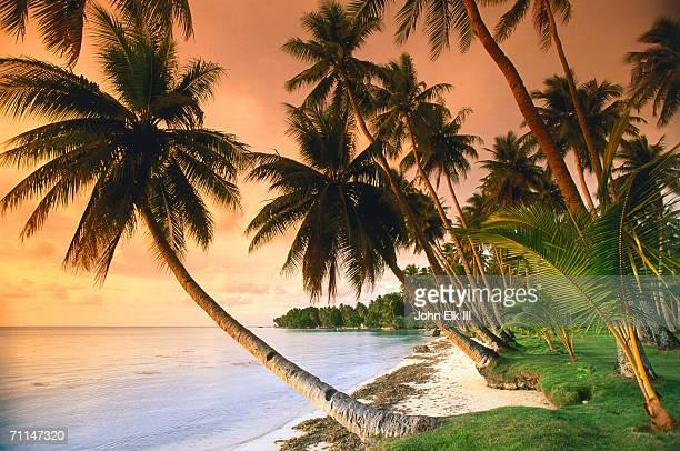 Blue Lagoon Resort beach, Weno Centre, Micronesia, Federated States of