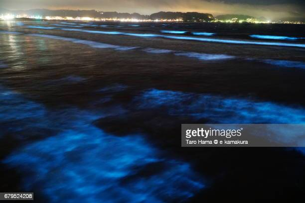 blue light bioluminescence from noctiluca scintillans on the night beach in kamakura, japan - bioluminescence stock pictures, royalty-free photos & images