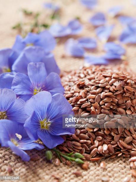 blue lin blooms and linseed on coarsely woven cloth