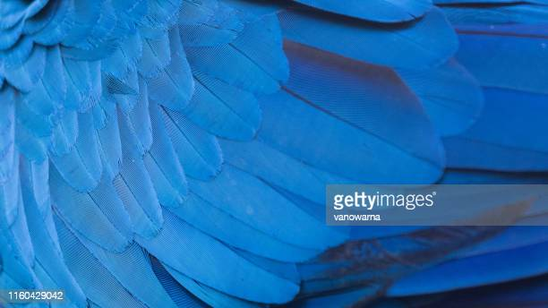 blue macaw wing texture - animal wing stock pictures, royalty-free photos & images