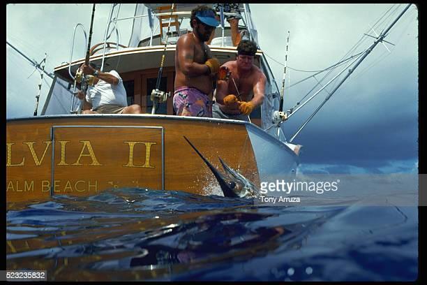 Blue Marlin Caught on Line