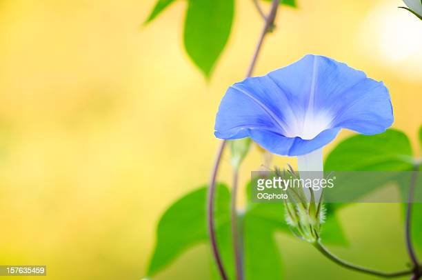 Morning Glories #4B VF 2010 Stock Image