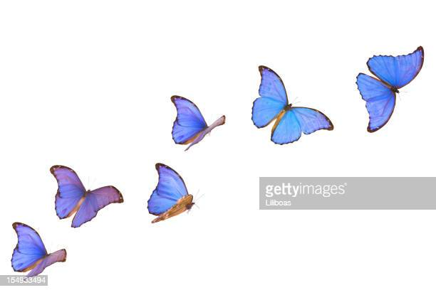 blue morpho butterfly banner - vlinder stockfoto's en -beelden