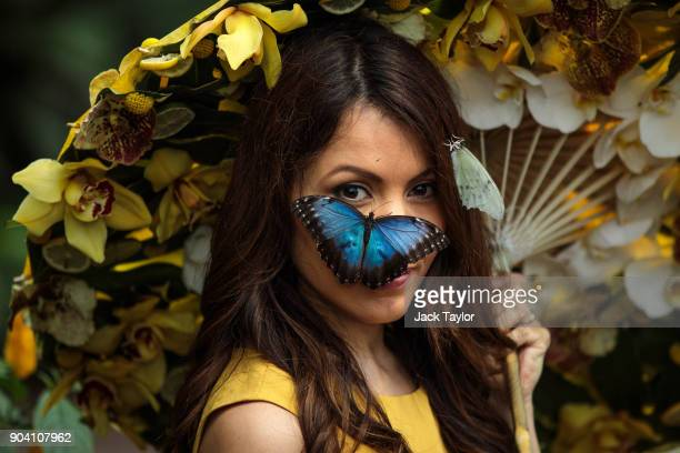 Blue Morpho butterfly sits on the face of model Jessie Baker as she poses during a photocall at RHS Garden Wisley on January 12 2018 in Woking...