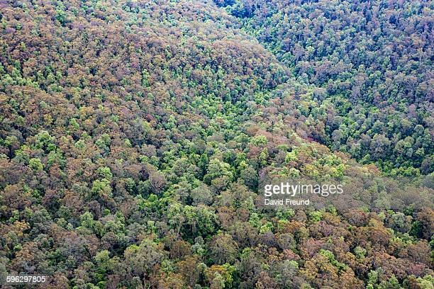blue mountains aerial trees australia - great dividing range stock-fotos und bilder