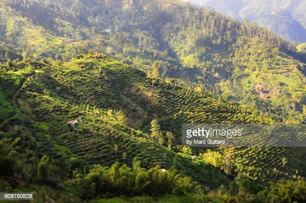 blue mountains, jamaica - paisajes de jamaica fotografías e imágenes de stock