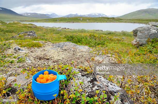 blue mug with cloudberries in arctic landscape - swedish lapland stock photos and pictures