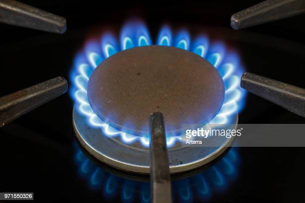 Blue natural gas flame on a domestic cooker gas hob