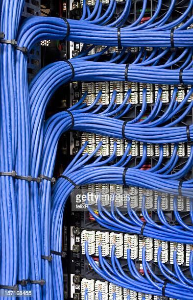 ブルーのネットワークケーブル