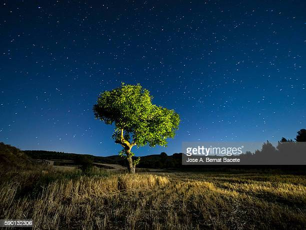 Blue night sky with stars with a tree with green leaves in a field