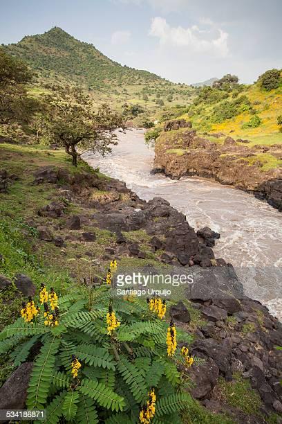 Blue Nile River below the waterfall