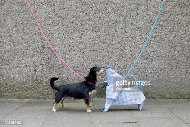 blue origami dog and dog sniffing - fake photos et images de collection