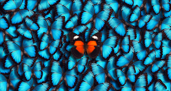 Blue Panoramic Butterfly Background 506859726