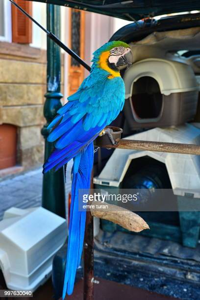 blue parrot(DSC_7729-1.jpg)