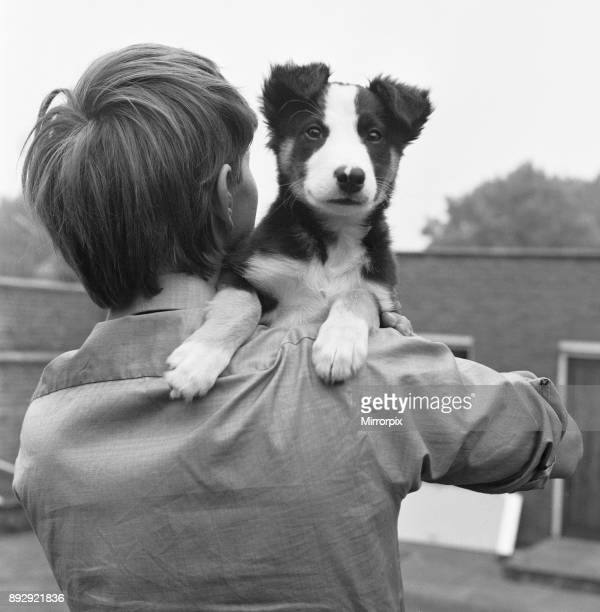 Blue Peter presenter John Noakes seen here with the programmes new border collie puppy The viewers will be invited to suggest a name when the new...