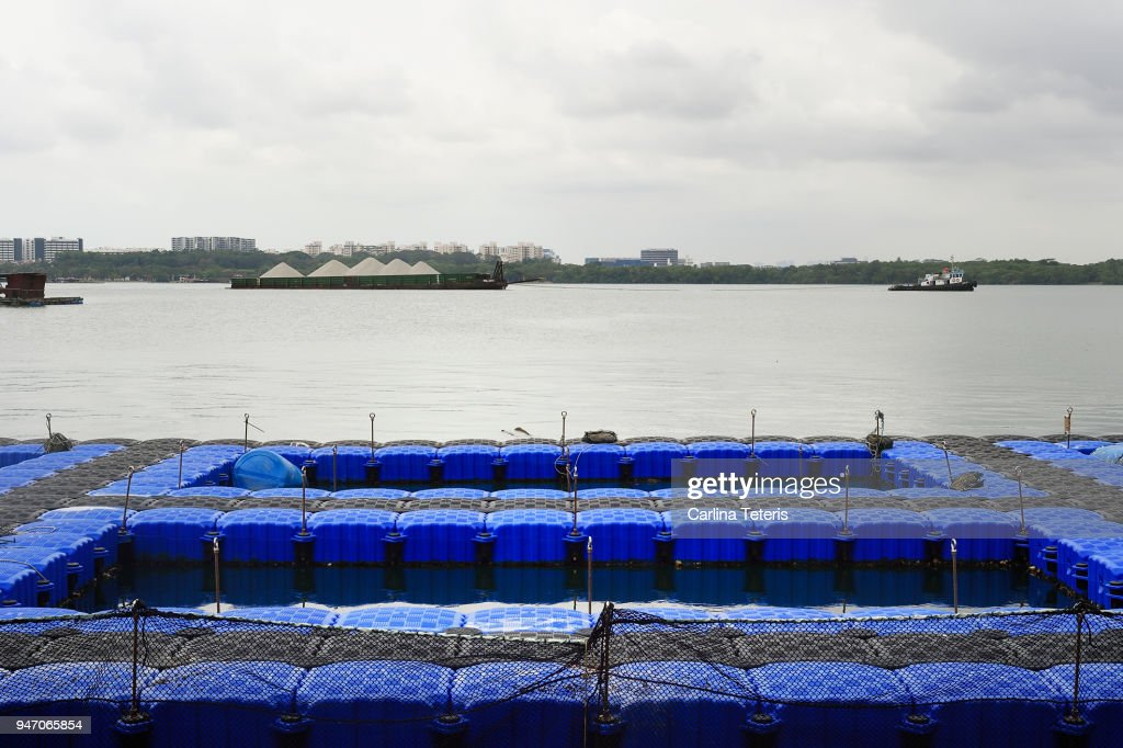 Blue Plastic Floats Forming Open Sea Fish Farming Pens Stock Photo ...