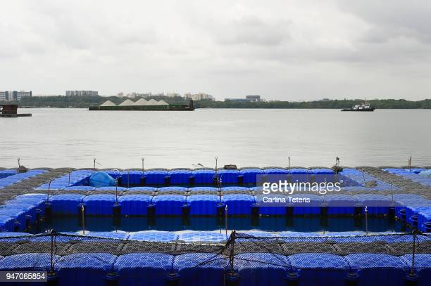blue plastic floats forming open sea fish farming pens - sea pen stock pictures, royalty-free photos & images