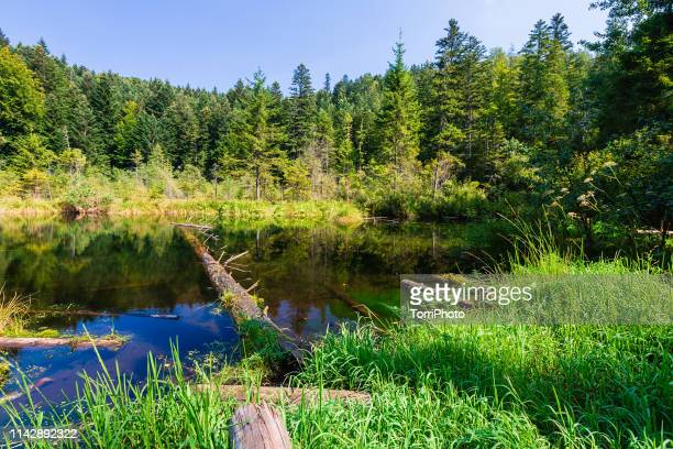 blue pond in summer pine forest - ukraine landscape stock pictures, royalty-free photos & images