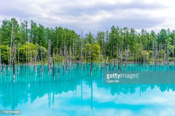 blue pond (aoiike) - landelement stockfoto's en -beelden