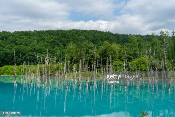 blue pond (aoiike) - liyao xie stock pictures, royalty-free photos & images