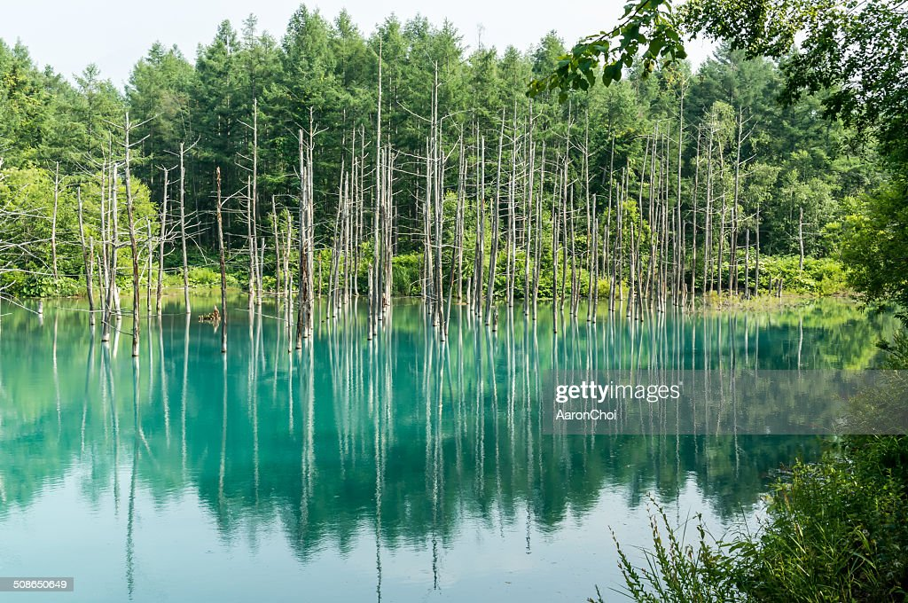 Blue Pond : Stock Photo