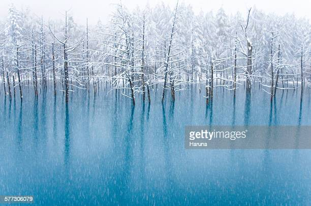 blue pond - hokkaido stock pictures, royalty-free photos & images