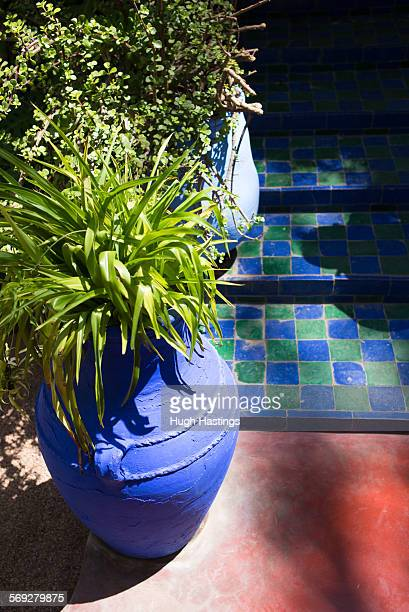 blue pot with plant in moroccan garden - hugh hastings stock pictures, royalty-free photos & images