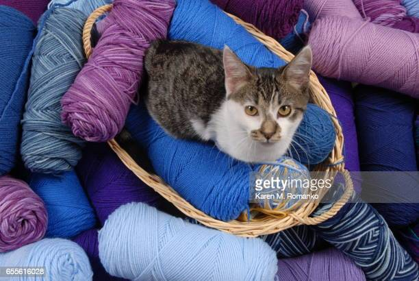 Blue / Purple Shades of Yarn with Kitten