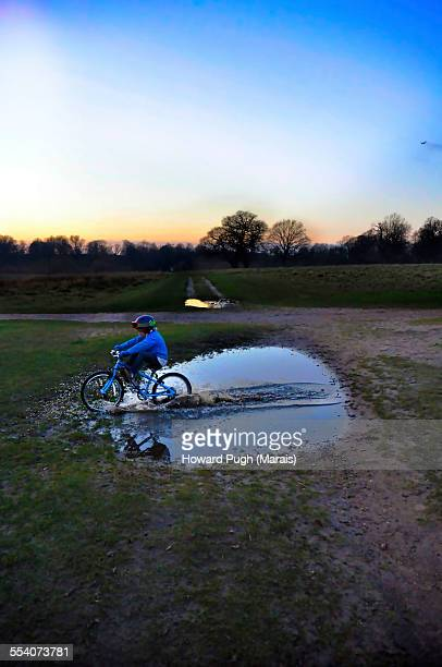 blue racer - howard pugh stock pictures, royalty-free photos & images