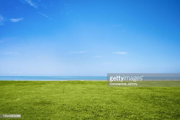 blue sky and green grass by the sea - gras stock pictures, royalty-free photos & images