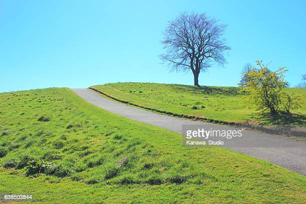 Blue sky and green grass view