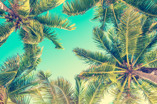 Blue sky and palm trees view from below, vintage style, summer background 938531990