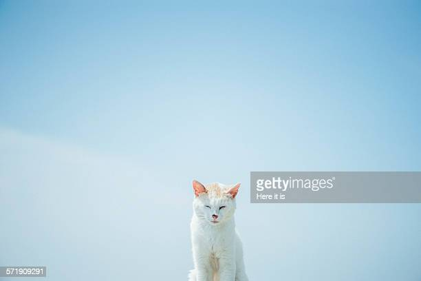 blue sky and white cat - シンプルな暮らし ストックフォトと画像