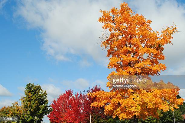 blue sky, great color - ファイアットヴィル ストックフォトと画像