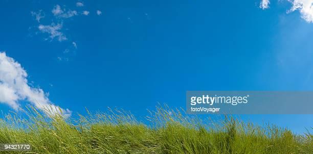 panorama de ciel bleu vert herbe - pureté photos et images de collection