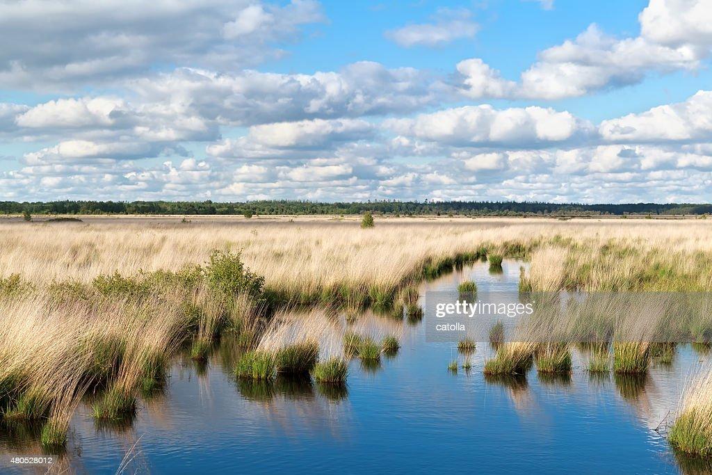 Ciel bleu sur un marais d'eau : Photo