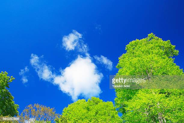 Blue Sky Over Trees