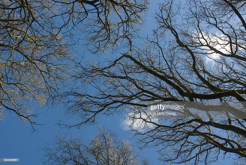 Blue sky through bare tree branches : ストックフォト