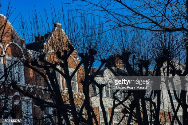 blue sky urban tree-scape - howard pugh stock pictures, royalty-free photos & images