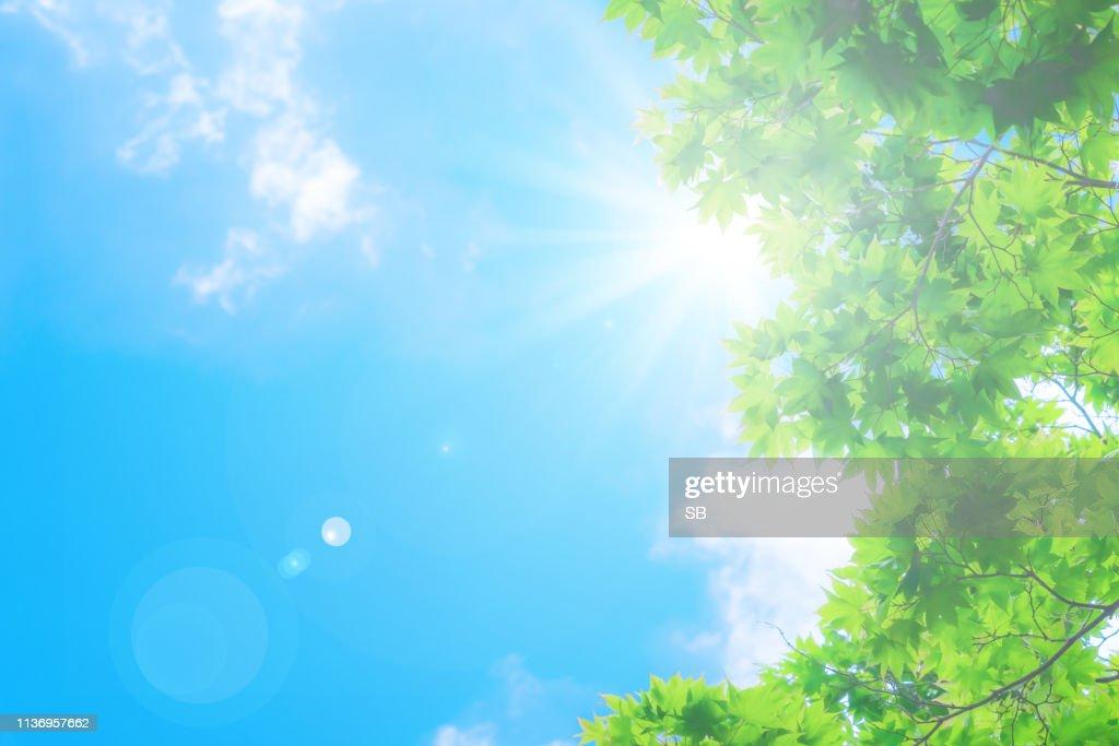 blue sky with sun : Stock Photo