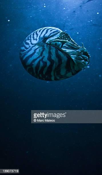blue snail - marc mateos fotografías e imágenes de stock