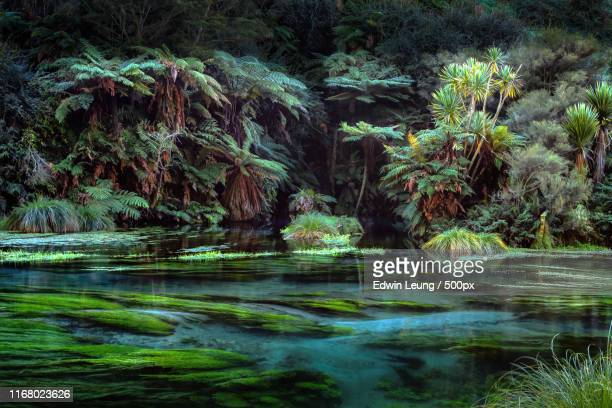 blue spring - rotorua stock pictures, royalty-free photos & images