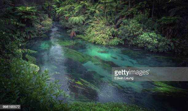 blue spring - river stock pictures, royalty-free photos & images