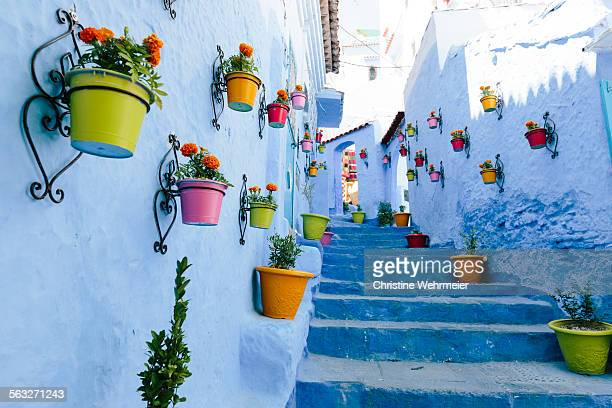 blue staircase & colourful flowerpots, chefchaouen - christine wehrmeier stock pictures, royalty-free photos & images