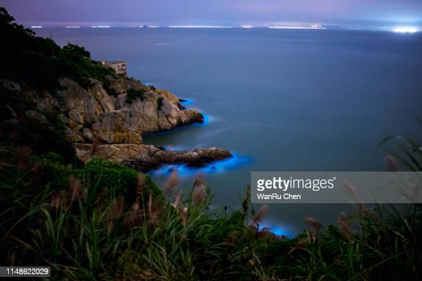 blue tears bioluminescent algae noctiluca scintillans - bay of water stock pictures, royalty-free photos & images